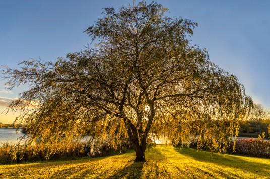 willow 2 nik